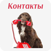 Контакты магазина холистик корма для собак