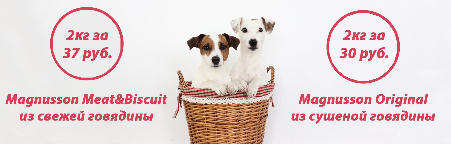 Заказать корм для собак на пробу