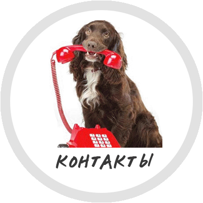 Контакты магазина корма для собак Magnusson
